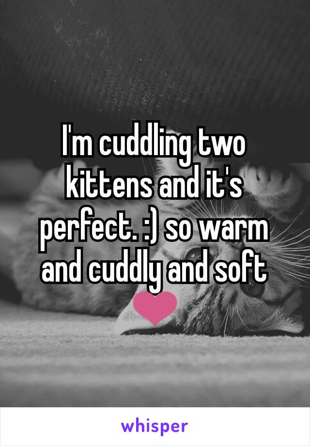 I'm cuddling two kittens and it's perfect. :) so warm and cuddly and soft ❤