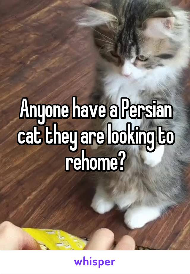 Anyone have a Persian cat they are looking to rehome?