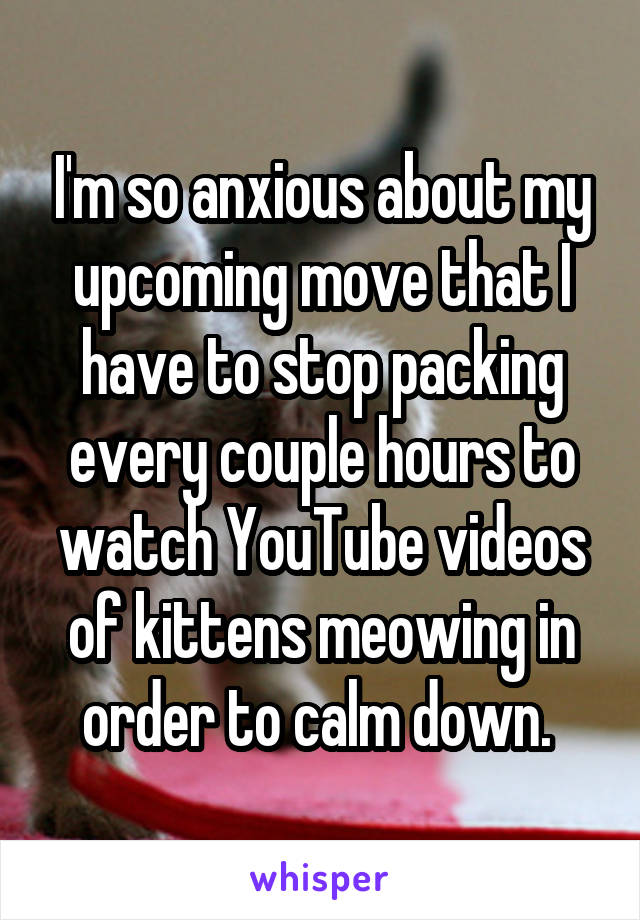 I'm so anxious about my upcoming move that I have to stop packing every couple hours to watch YouTube videos of kittens meowing in order to calm down.