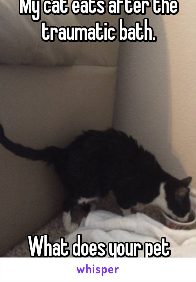 My cat eats after the traumatic bath.        What does your pet do?