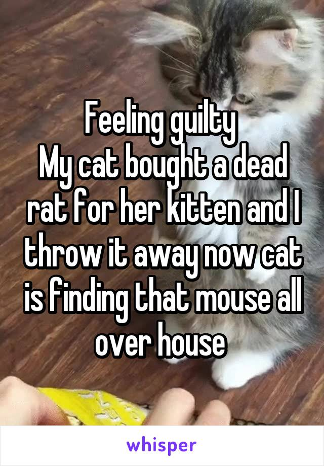 Feeling guilty  My cat bought a dead rat for her kitten and I throw it away now cat is finding that mouse all over house