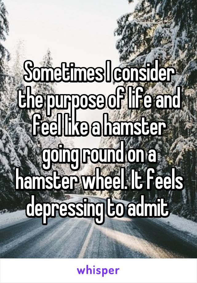 Sometimes I consider the purpose of life and feel like a hamster going round on a hamster wheel. It feels depressing to admit