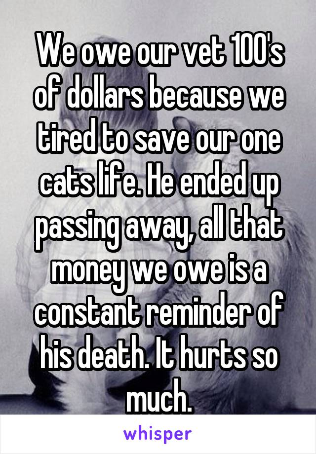 We owe our vet 100's of dollars because we tired to save our one cats life. He ended up passing away, all that money we owe is a constant reminder of his death. It hurts so much.