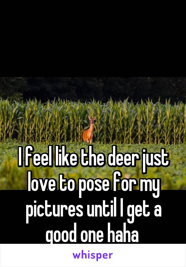I feel like the deer just love to pose for my pictures until I get a good one haha