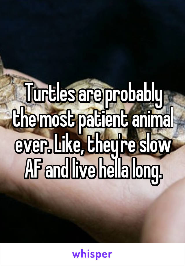 Turtles are probably the most patient animal ever. Like, they're slow AF and live hella long.