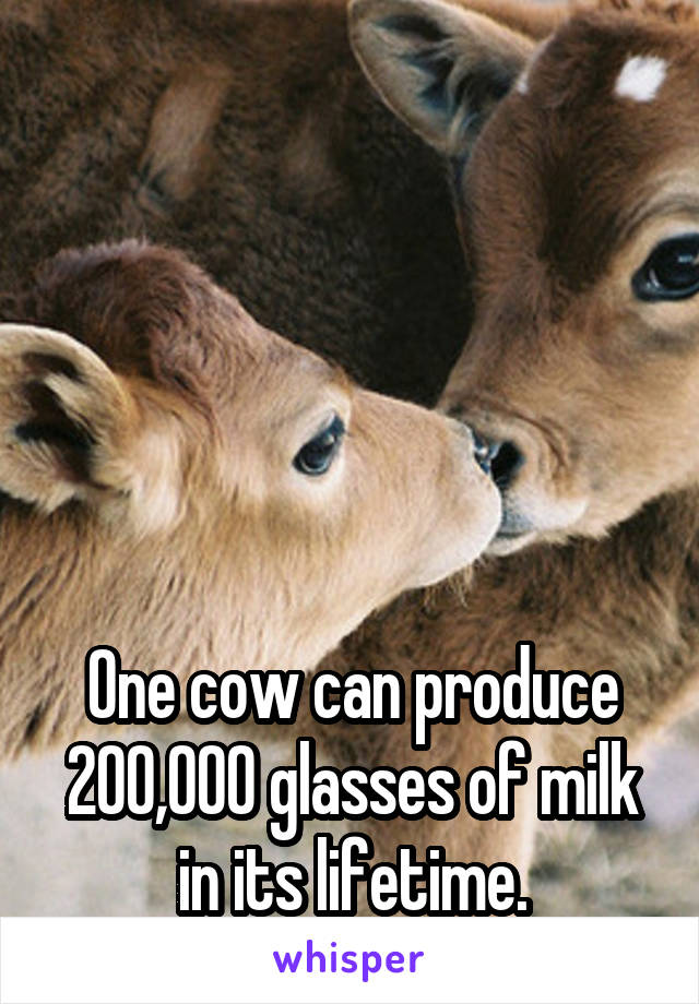 One cow can produce 200,000 glasses of milk in its lifetime.