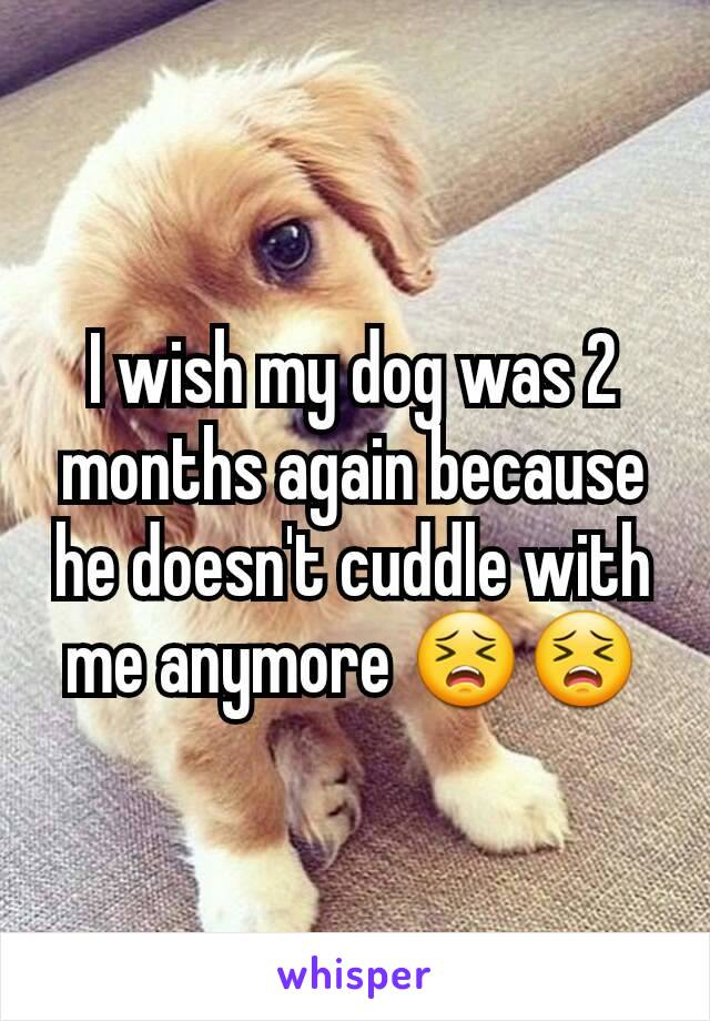 I wish my dog was 2 months again because he doesn't cuddle with me anymore 😣😣