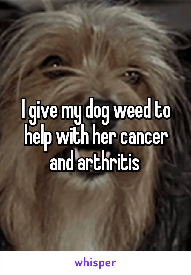 I give my dog weed to help with her cancer and arthritis
