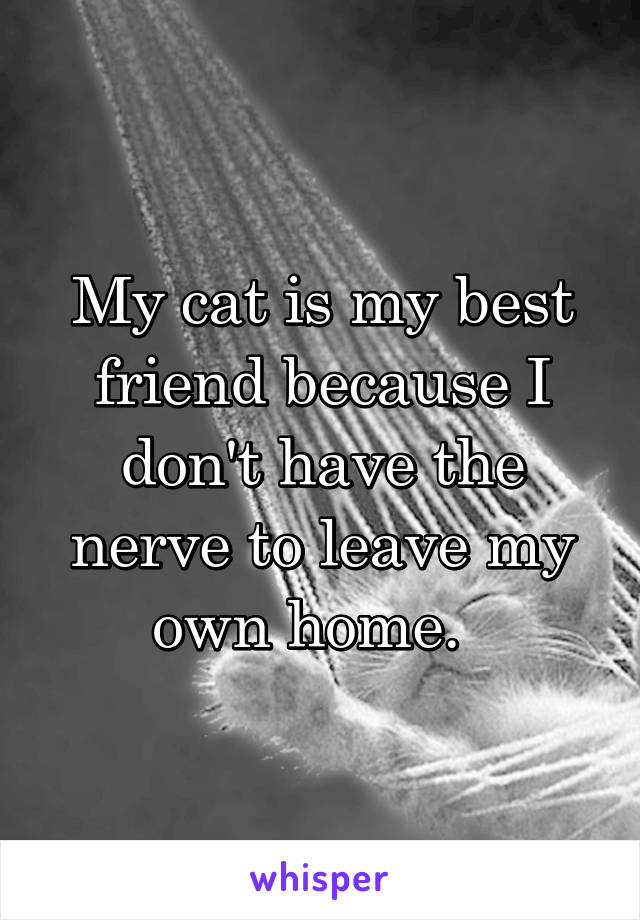 My cat is my best friend because I don't have the nerve to leave my own home.