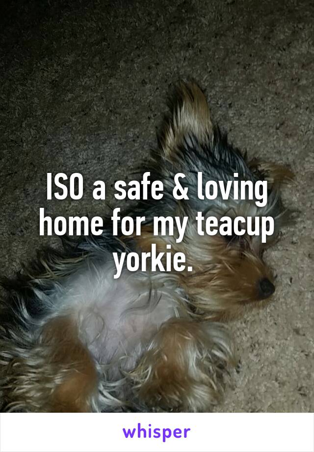 ISO a safe & loving home for my teacup yorkie.