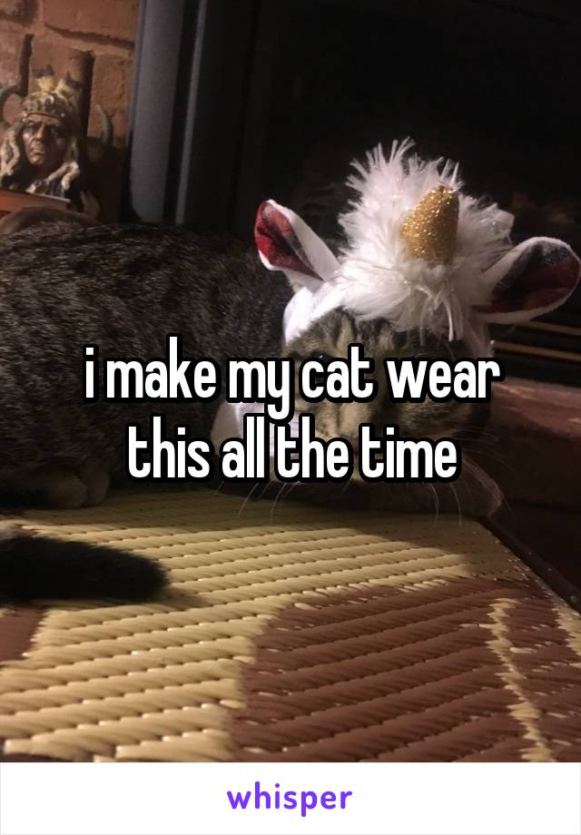 i make my cat wear this all the time