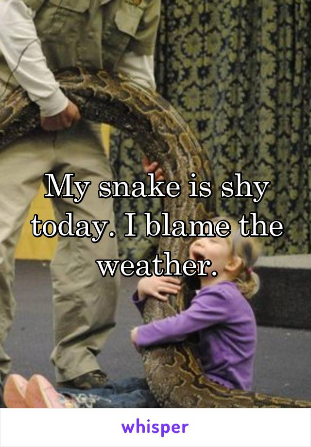 My snake is shy today. I blame the weather.