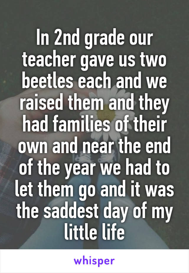 In 2nd grade our teacher gave us two beetles each and we raised them and they had families of their own and near the end of the year we had to let them go and it was the saddest day of my little life
