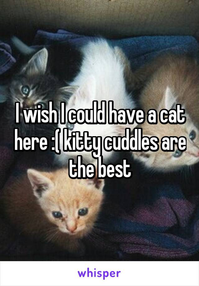 I wish I could have a cat here :( kitty cuddles are the best