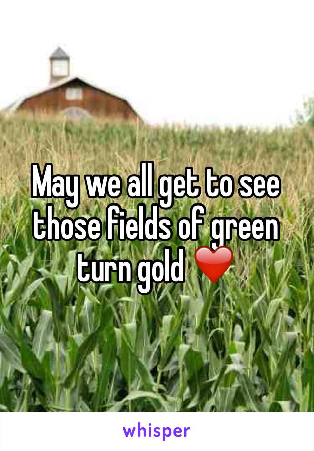 May we all get to see those fields of green turn gold ❤️