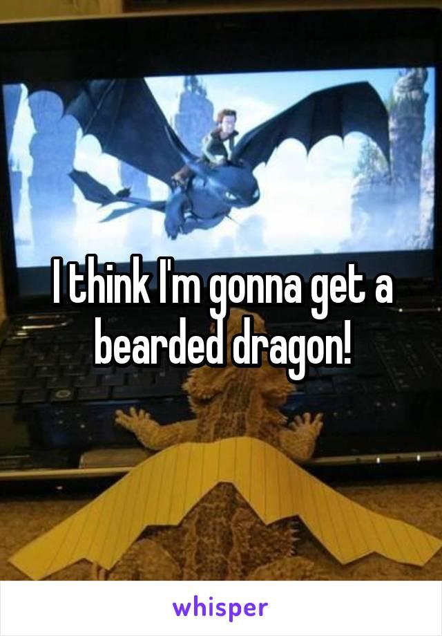 I think I'm gonna get a bearded dragon!