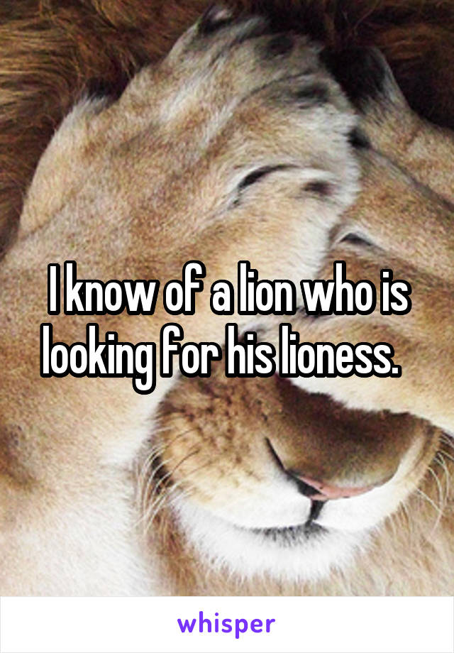 I know of a lion who is looking for his lioness.
