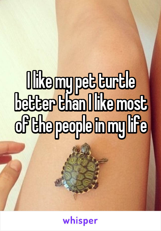 I like my pet turtle better than I like most of the people in my life