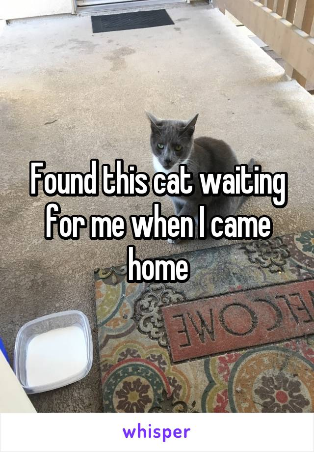 Found this cat waiting for me when I came home