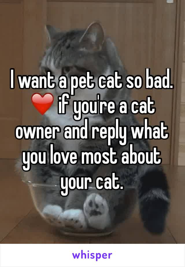 I want a pet cat so bad. ❤️️ if you're a cat owner and reply what you love most about your cat.