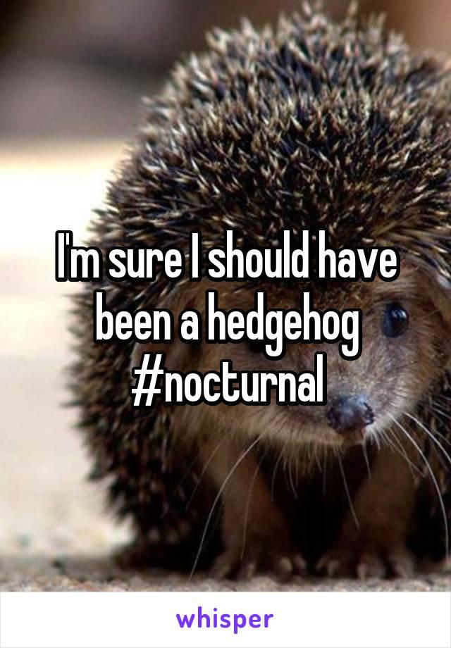 I'm sure I should have been a hedgehog #nocturnal