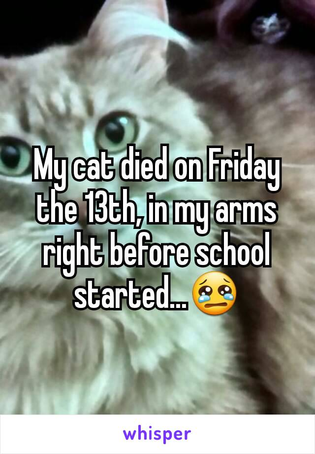 My cat died on Friday the 13th, in my arms right before school started...😢