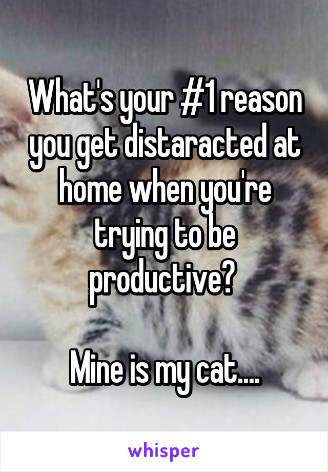 What's your #1 reason you get distaracted at home when you're trying to be productive?   Mine is my cat....