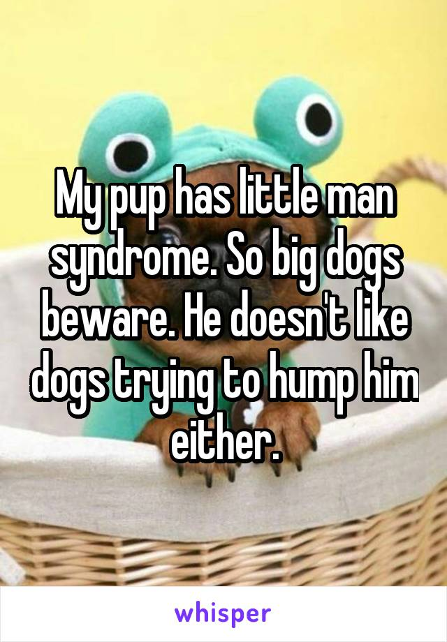 My pup has little man syndrome. So big dogs beware. He doesn't like dogs trying to hump him either.