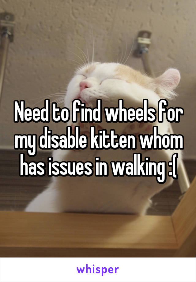 Need to find wheels for my disable kitten whom has issues in walking :(