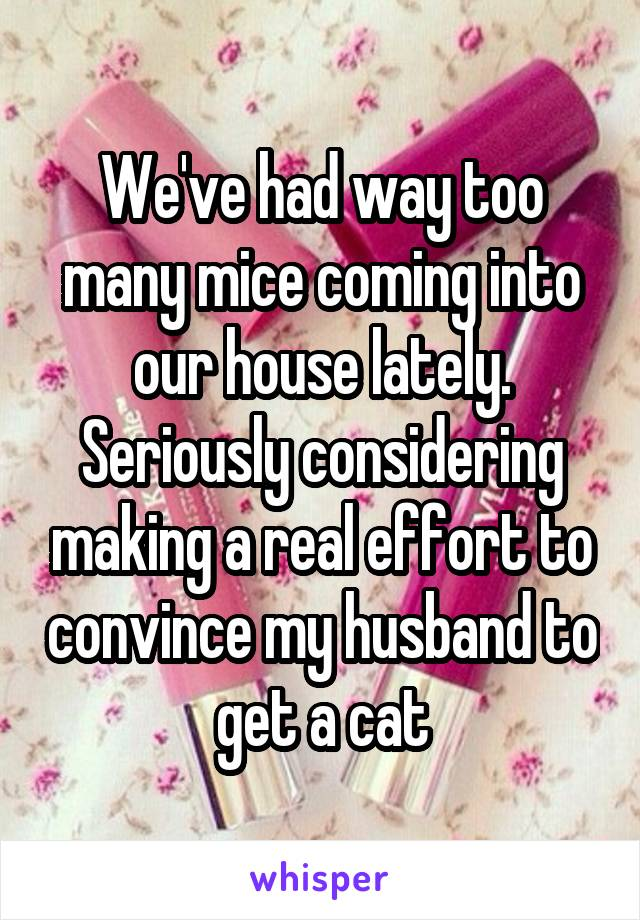 We've had way too many mice coming into our house lately. Seriously considering making a real effort to convince my husband to get a cat