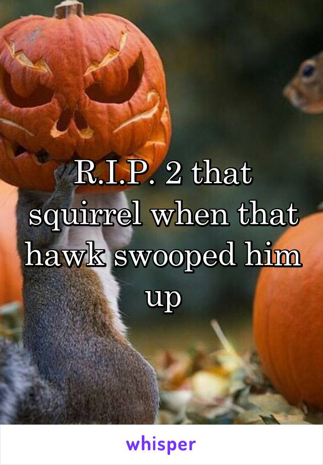 R.I.P. 2 that squirrel when that hawk swooped him up