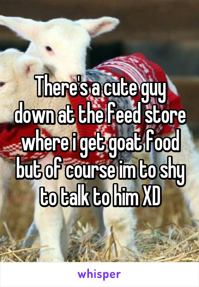 There's a cute guy down at the feed store where i get goat food but of course im to shy to talk to him XD