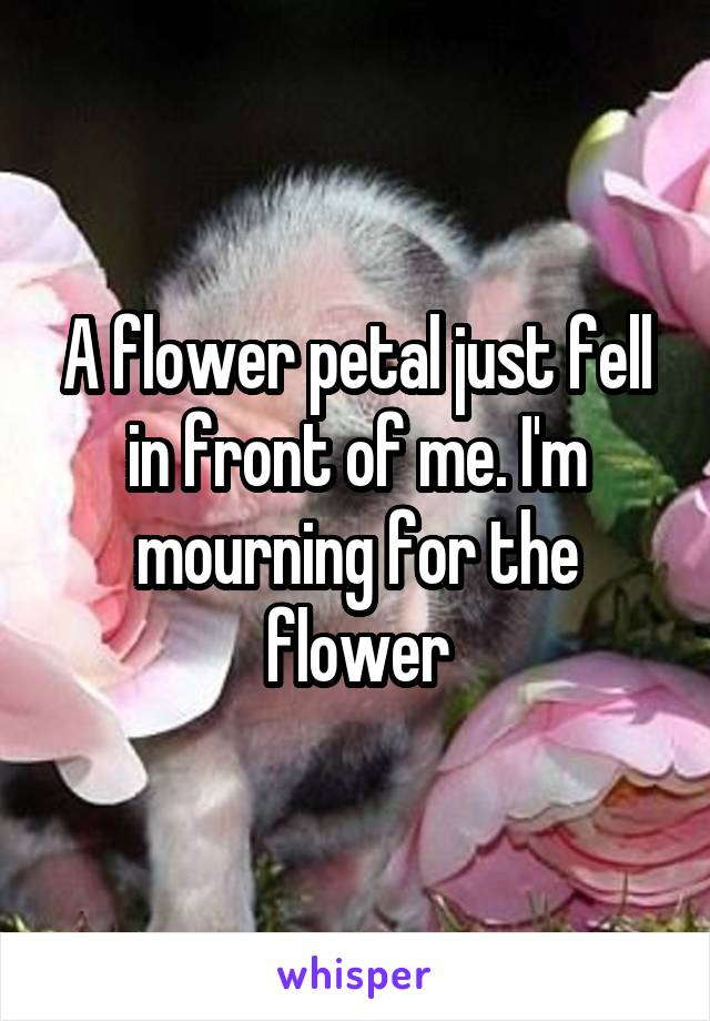 A flower petal just fell in front of me. I'm mourning for the flower