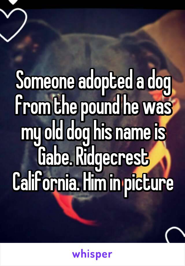 Someone adopted a dog from the pound he was my old dog his name is Gabe. Ridgecrest California. Him in picture