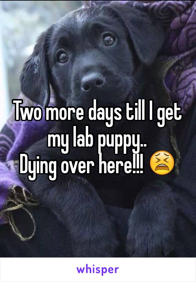 Two more days till I get my lab puppy.. Dying over here!!! 😫
