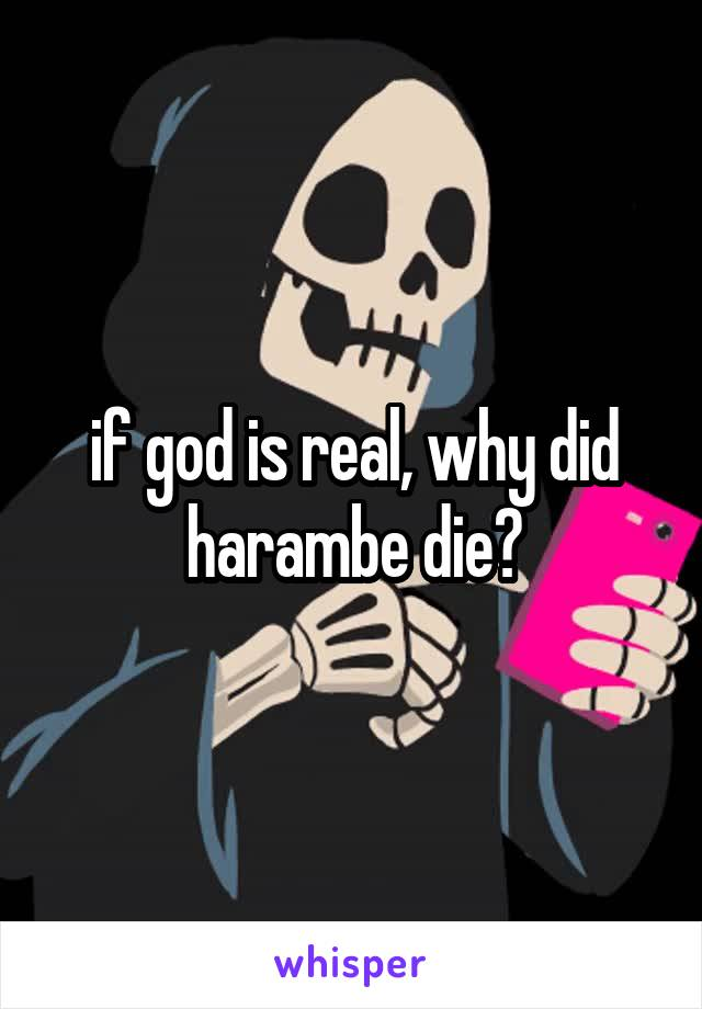 if god is real, why did harambe die?