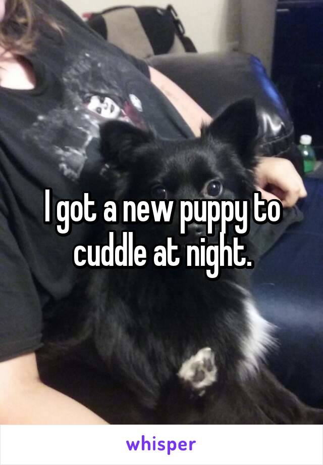 I got a new puppy to cuddle at night.