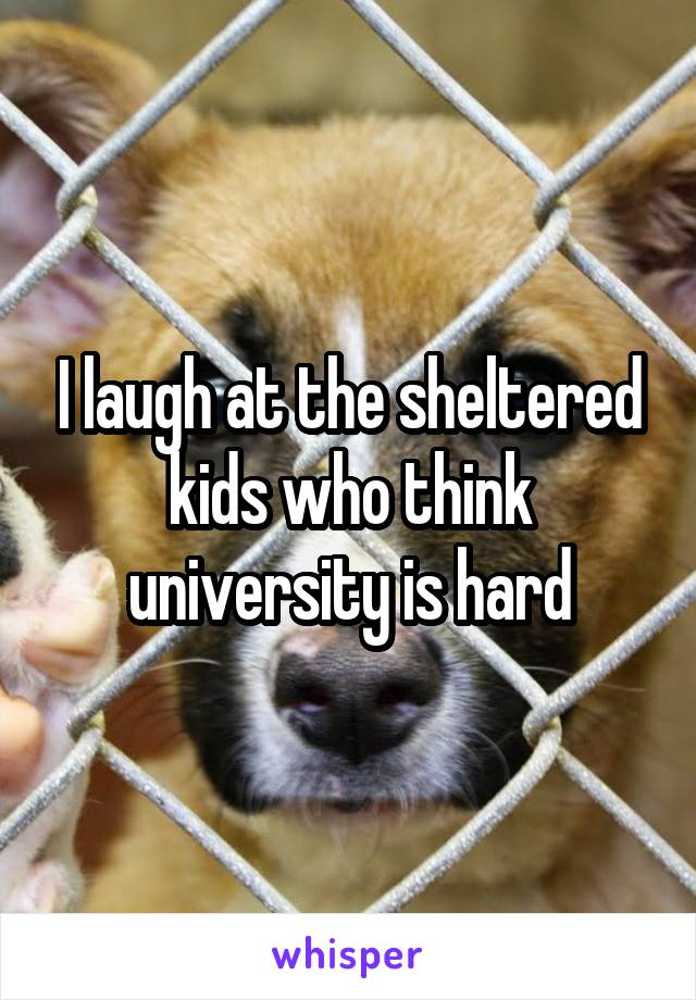 I laugh at the sheltered kids who think university is hard