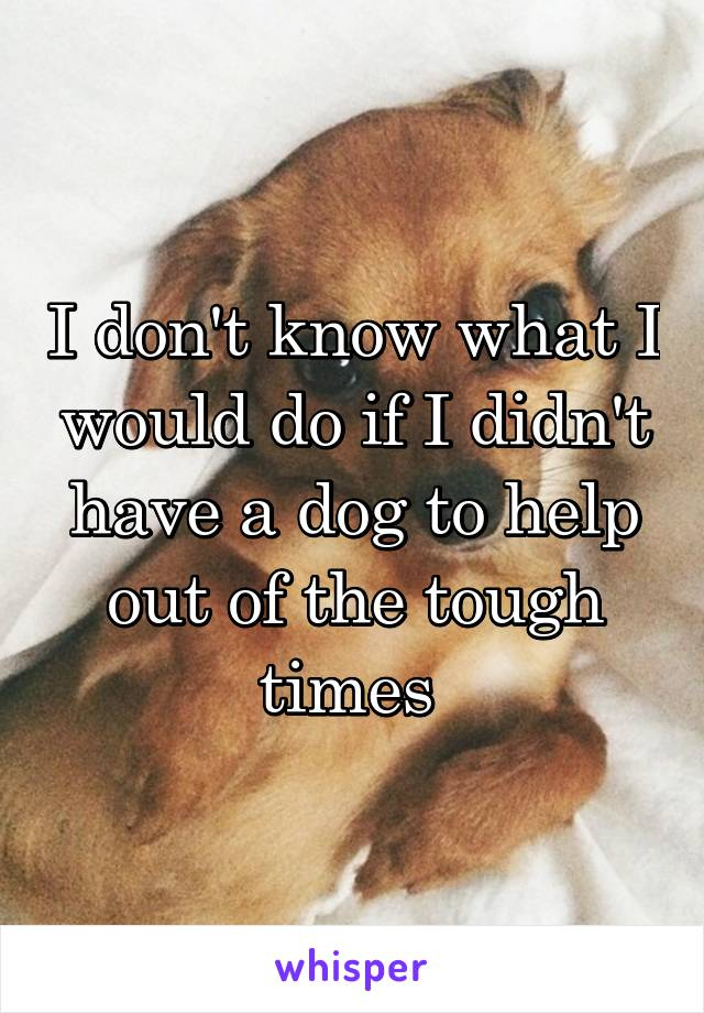 I don't know what I would do if I didn't have a dog to help out of the tough times