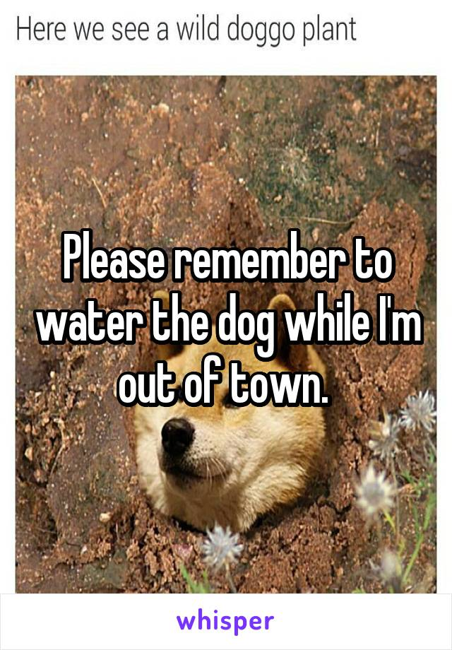 Please remember to water the dog while I'm out of town.