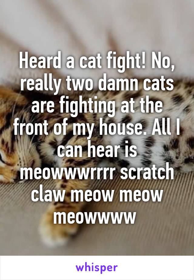 Heard a cat fight! No, really two damn cats are fighting at the front of my house. All I can hear is meowwwrrrr scratch claw meow meow meowwww