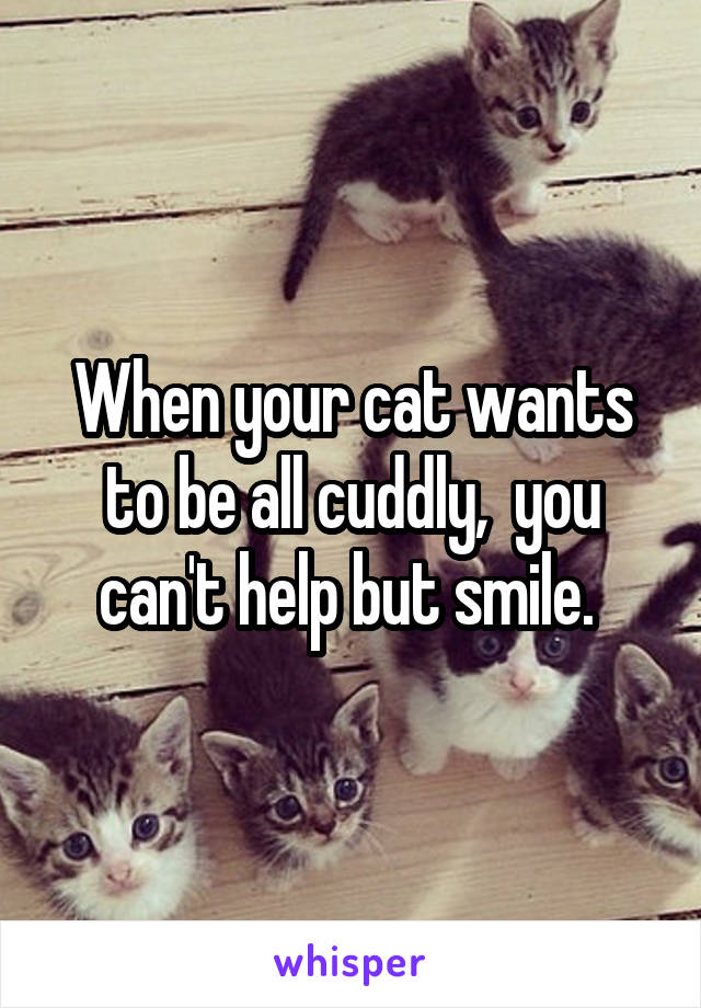 When your cat wants to be all cuddly,  you can't help but smile.