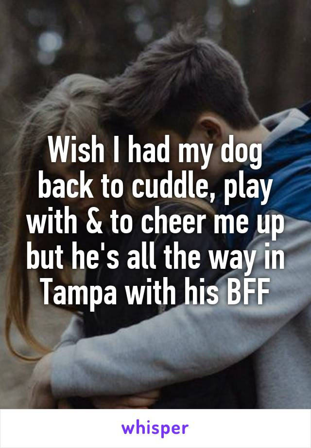 Wish I had my dog back to cuddle, play with & to cheer me up but he's all the way in Tampa with his BFF