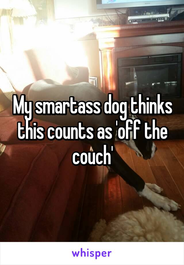 My smartass dog thinks this counts as 'off the couch'