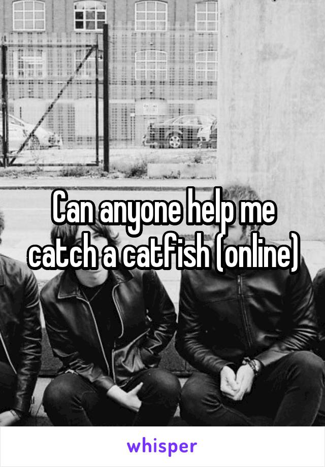 Can anyone help me catch a catfish (online)