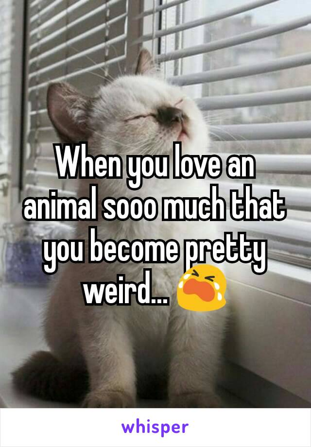 When you love an animal sooo much that you become pretty weird... 😭
