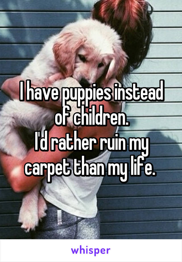 I have puppies instead of children. I'd rather ruin my carpet than my life.