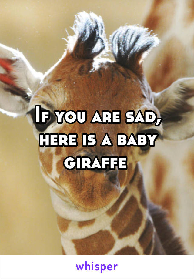 If you are sad, here is a baby giraffe