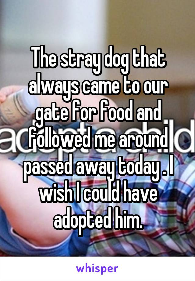 The stray dog that always came to our gate for food and followed me around passed away today . I wish I could have adopted him.