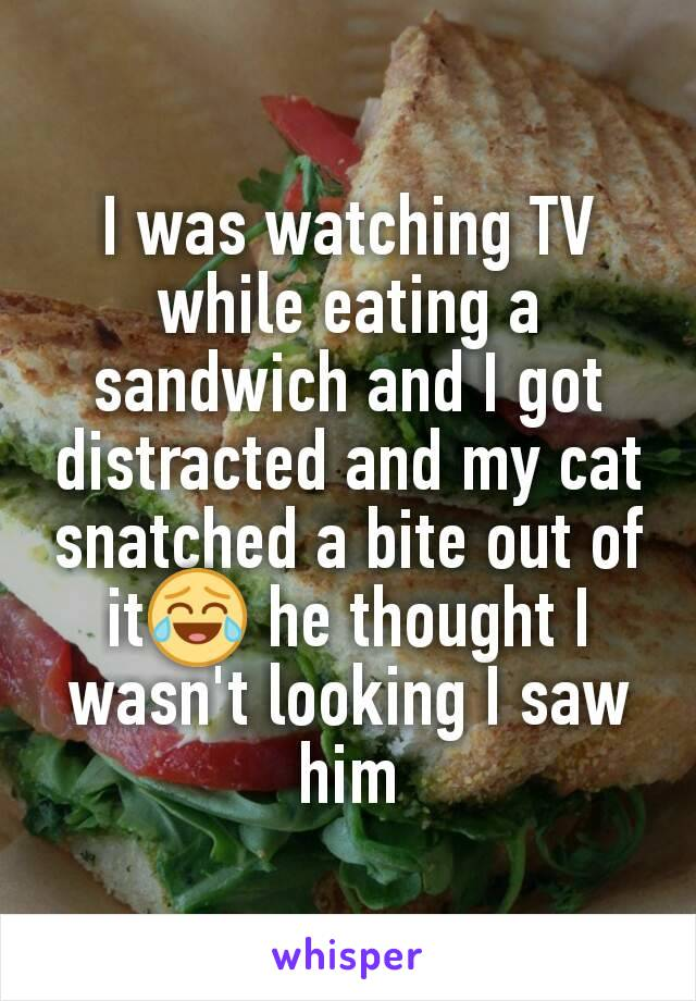 I was watching TV while eating a sandwich and I got distracted and my cat snatched a bite out of it😂 he thought I wasn't looking I saw him